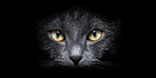 Il gattone dagli occhi accesi